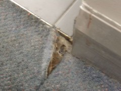 Asbestos Carpet Underlay Information Safe Environments